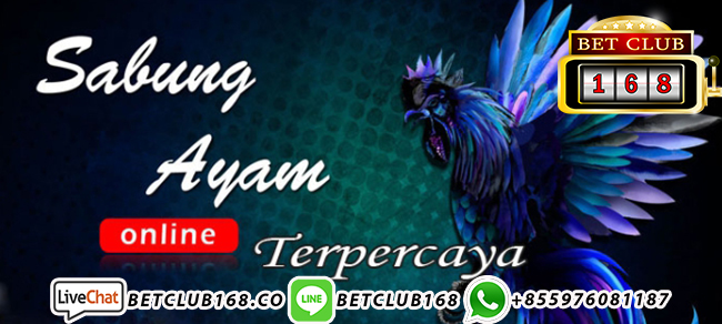 Download Aplikasi Sabung Ayam S128 & SV388
