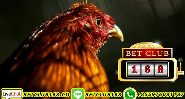 Link Alternatif Sabung Ayam s128